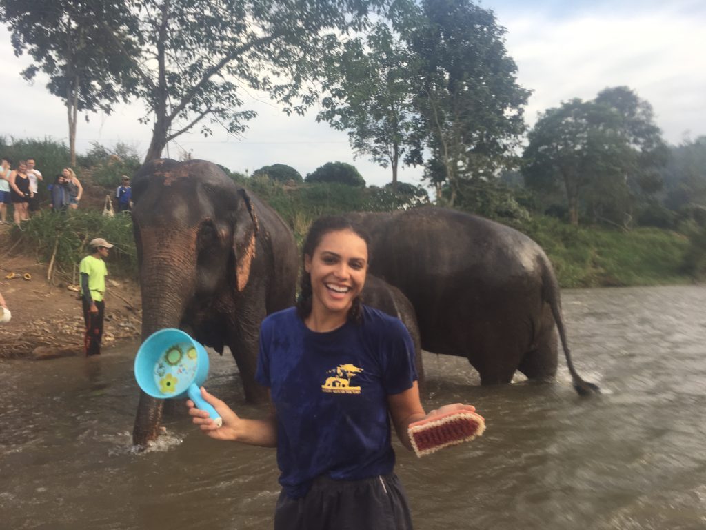Washing elephants in the river at Chiang Mai Mountain Sanctuary in Chiang Mai, Thailand
